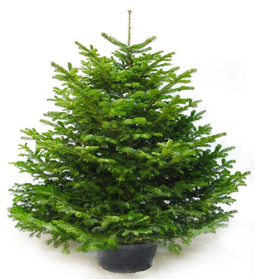 елки зимой